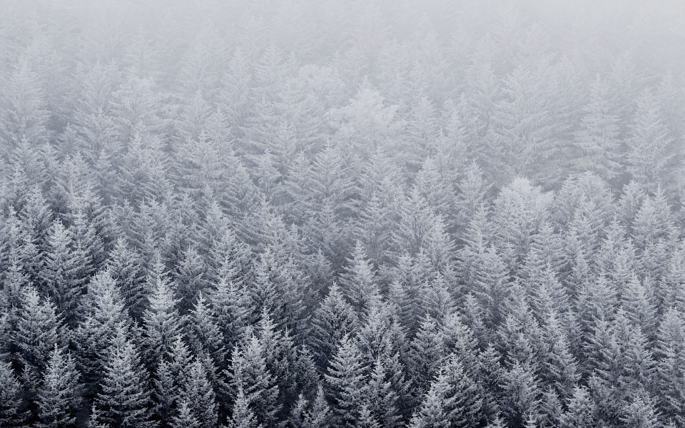 Download Snow Trees IPhone 6 Wallpaper