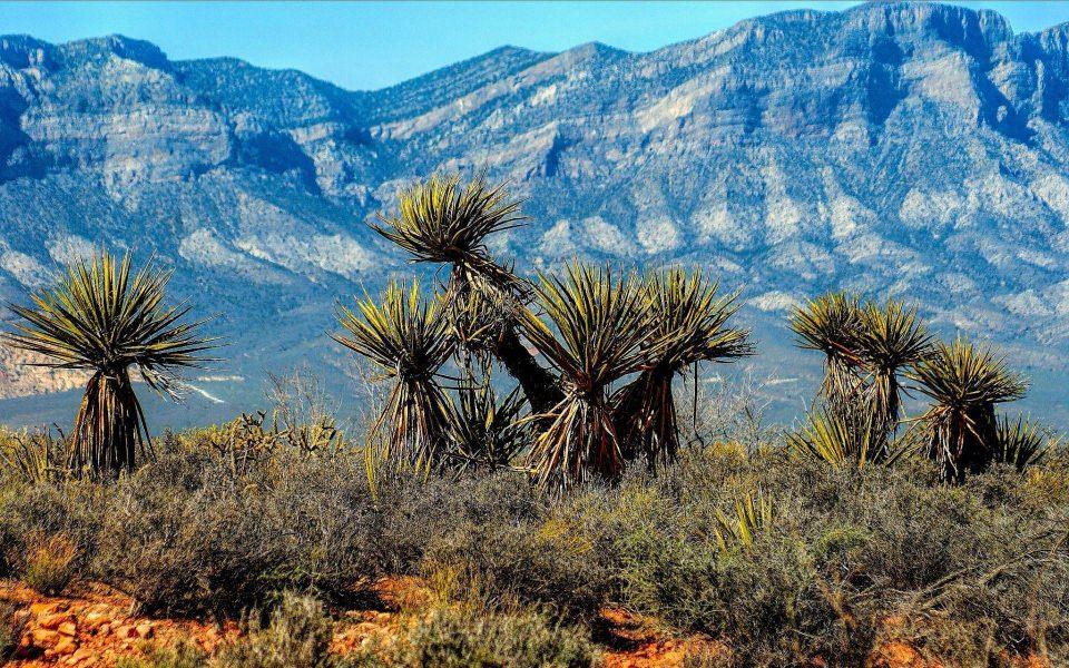 Download Nevada Hd 2020 Iphone 11 4k Photos Mobile Desktop Background Wallpaper Getwalls Io