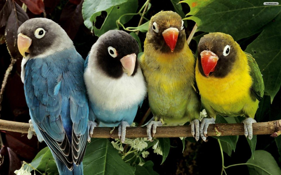 Download Birds 4k Ultra Hd Background Photos Wallpaper Getwalls Io