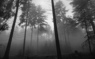 Download Black Metal Forest Wallpaper Wallpaper Getwalls Io